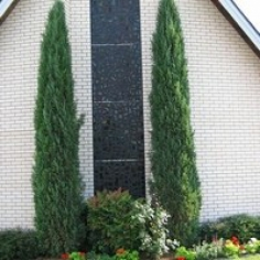 """Juniperus Virginiana""""Sentinel"""" - Ienupar"""